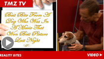 """Uggie from """"The Artist"""" -- Nipping the Hand that Pleads"""