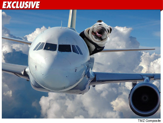 39 final four 39 bulldog mascot flying like a boss for Small dogs on airplanes