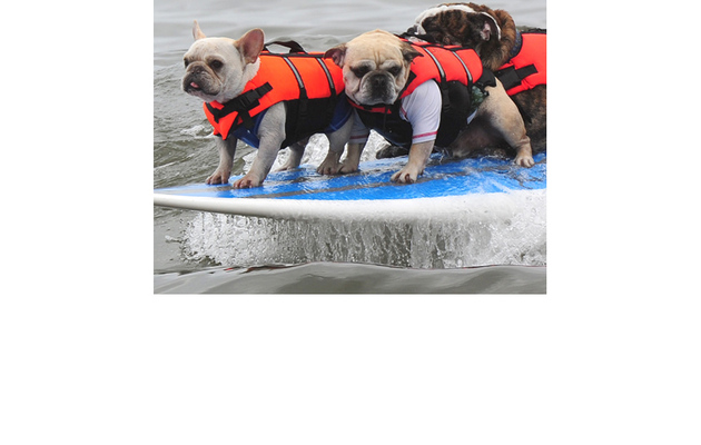 Fun Photos: Dogs Go Surfing in Southern California!
