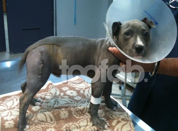 Josh Hutcherson dog