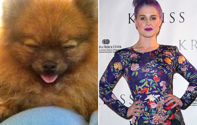 Kelly Osbourne Adopts Adorable Pomeranian