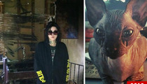 Kat Von D Sued Over Cat-Killing Fire