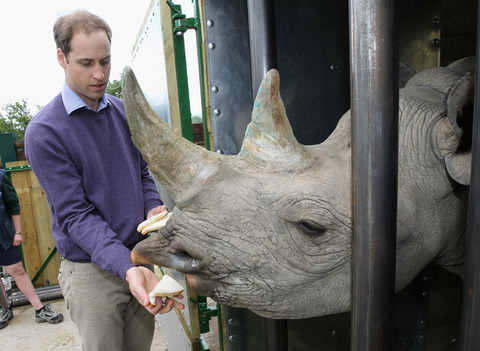 Prince William, Duke of Cambridge visited the Port Lympne Wild Animal Park to meet gorillas and rhinos involved in a translocation project.