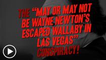 Wayne Newton -- Might Wallaby Keeping an Eye on His Exotic Pets