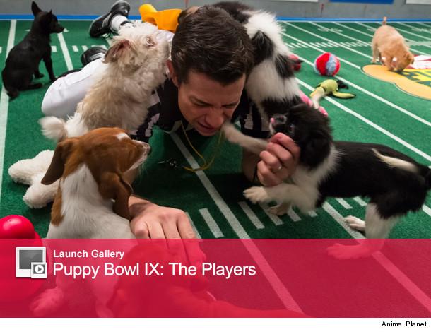 0124_puppy_launch0