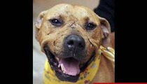 Michael Vick -- Grand Champion Pit Bull Euthanized After Dogfighting Career