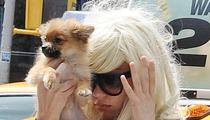 Amanda Bynes -- Reunited with Gasoline-Soaked Dog