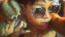 Rihanna Triggers Arrests Over Cute, Furry, Deadly Creatures
