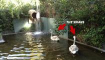 Lisa Vanderpump -- Rich People Problems ... MY SWAN HAS GONE MISSING!!
