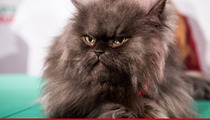 Colonel Meow -- Death Caused by Heart Cat-astrophy