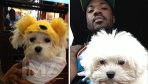 Ray J's Dog is Lost -- 3-lb Boogotti Has Gone Missing!!!