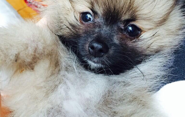 Miley Cyrus Mends Broken Heart with New Furry Friend Moonie