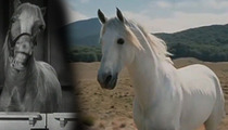 'Lord of the Rings' Horse Shadowfax -- Gandalf's Gonna Need a New Ride