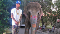 Tyga -- Music Video Features Major Junk, a Trunk ... and One Helluva Waterfall