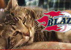 Hero Cat To Throw Out First Pitch at Minor League Baseball Game