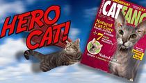 Hero Cat -- Everyone Wants a Piece ... She's So So Fancy