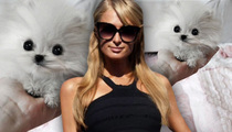 Paris Hilton -- Beware My $13K Dog ... You Might Sit On It