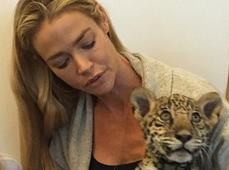 Denise Richards Poses with Baby Jaguar with Daughters Sam and Lola!