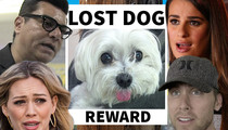 Stolen Beverly Hills Dog -- Hilary Duff & Celeb Posse Scour City