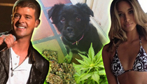 Robin Thicke -- Pot Treats for Puppy ... No Bueno! (TMZ TV)