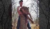 Dr. Walter Palmer Surfaces ... Contacts Investigators