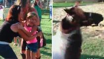 Mini Ponies -- Super Cute ... And Incredibly Dangerous (Video)