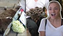'Gotham' Star Natalie Alyn Lind -- Fish & Raccoons Deserve Funerals Too, Y'know! (TMZ TV)