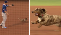 Wiener Dog On The Loose -- At The Ballpark ... Players Can't Catch Him