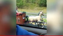 Horse-Drawn Chariot Car Spotted on Highway (VIDEO)