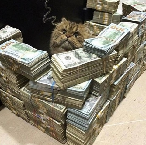 <p>Instagram is full of cool cat photos ... but there's one kitty account that makes them all look like litter!</p> <p><span>@Cashcats</span> is a VIP account for only the most prosperous of house pets ... with each feline photo including crazy amounts of cold hard cash!</p>