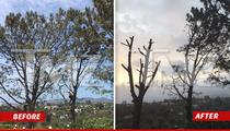 Matt Groening -- Neighborhood War Erupts Over Pine Tree Massacre