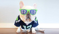 NFL's Furriest Fan -- All In for the Seattle Seahawks