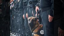 Paris Terror Attacks -- Diesel The Police Dog Killed During Raid