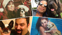 TMZ Staff Picks -- What's Your Favorite Dog?!