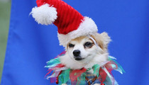 Doggy Dress Up Competition -- See The Christmas Canines