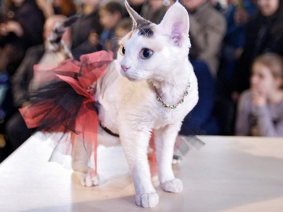 Cats In Costume Compete For Miss Meow Title -- See The Feline Photos