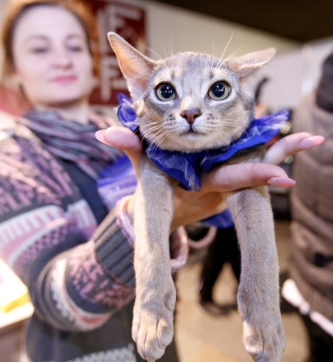 <p>The claws were out as cats duked it out for the title of <span>Miss Meow</span> in Ukraine.</p> <p>Paw through the purrrrrrrrrr-fect pics to see the fierce felines competing for the esteemed title.</p> <p>Costumed cats compete in Kiev ... try saying that five times fast!</p>