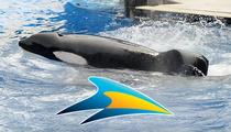 SeaWorld -- 'Blackfish' Whale Tilikum Close To Death