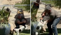 Cesar Millan -- Video of Dog Attacking Pig Does Not Show Cruelty