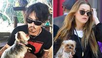 Johnny Depp, Amber Heard -- A Dog House Divided