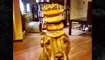 'Stuff on Scout's Head' Dog -- Dead at 12