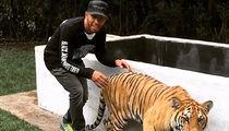 Lewis Hamilton -- Stalks Live Tiger ... Survives (VIDEO)