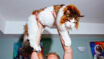 ABC News Sued -- You Jacked My Fat Cat and That'll Cost You a Chunk! (PHOTOS)
