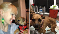 Anna Faris -- $5k Fine After Adopted Pooch Found On the Streets (PHOTOS)