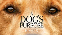 Huge Fine and Jail Possible For 'A Dog's Purpose' Crew