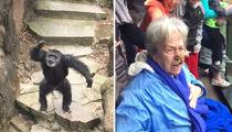 Chimpanzee Flings Poo, Grandma Gets It IN THE FACE!! (VIDEO)
