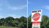'Shawshank Redemption' Oak Tree Cut Down Forever (PHOTO)