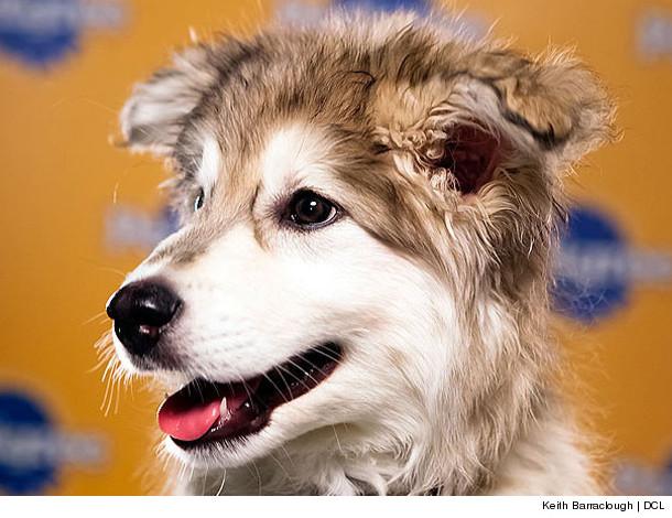 0124_puppy_inset