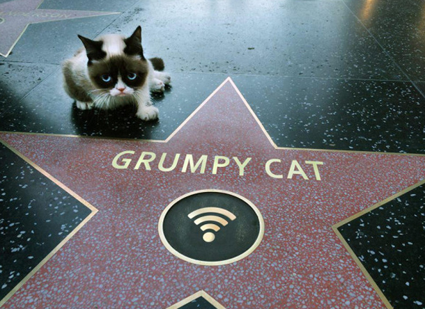 1213_grumpy