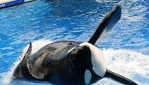 SeaWorld Whale Tilikum Dead at 36